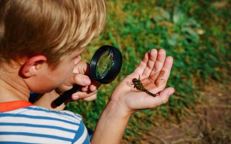 Niño observando insectos